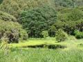 Pond at Te Rakau